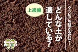 どんな土が適している?