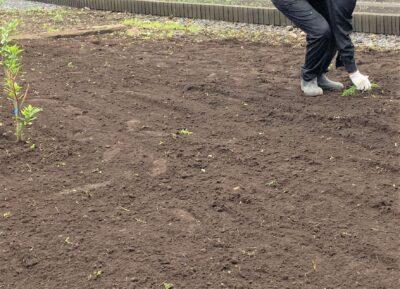植付前はしっかり除草
